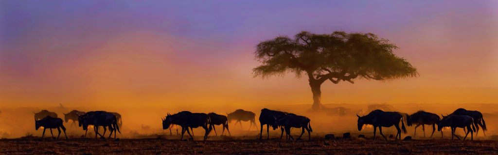 Kenya holidays and safaris